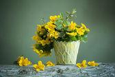 Zátiší s žlutým jarní květy