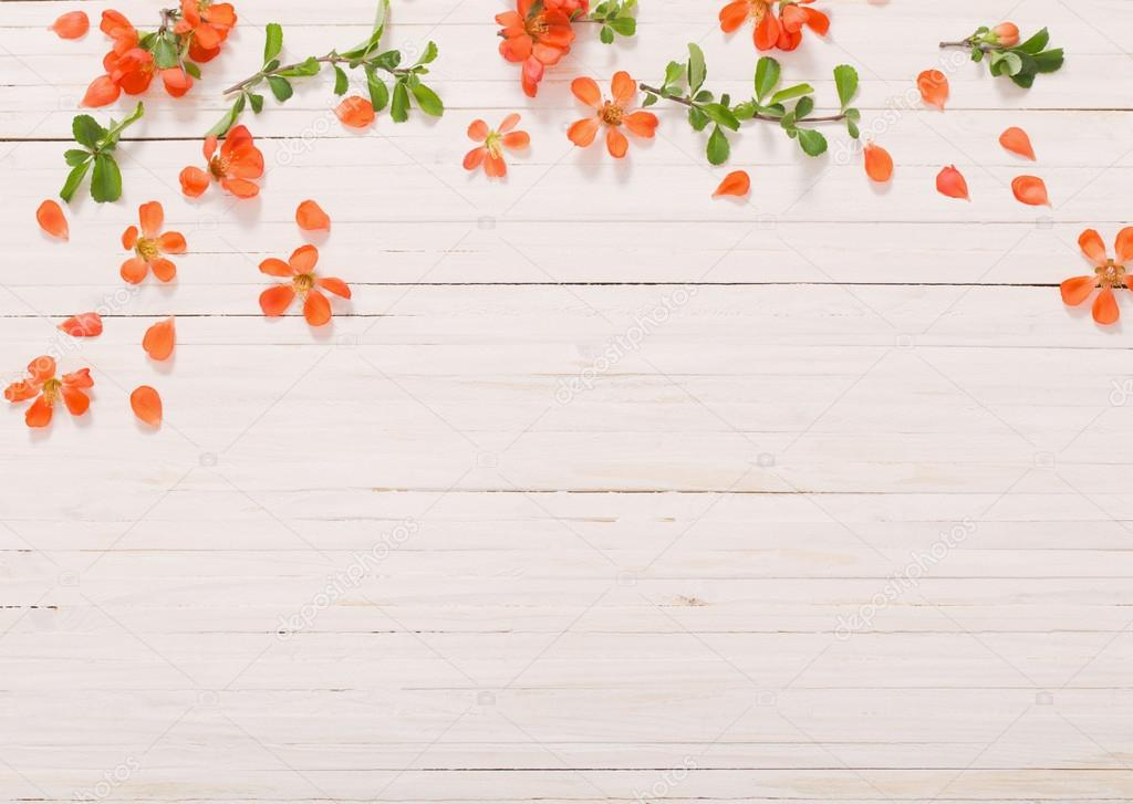 red flowers on white wooden background