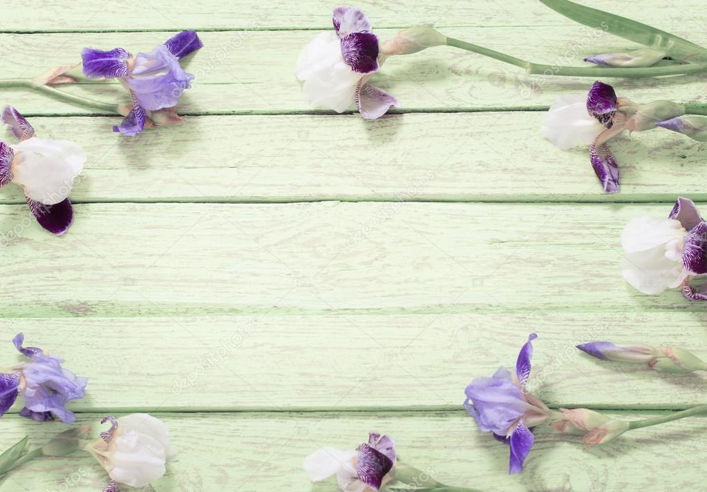 iris on blue wooden background