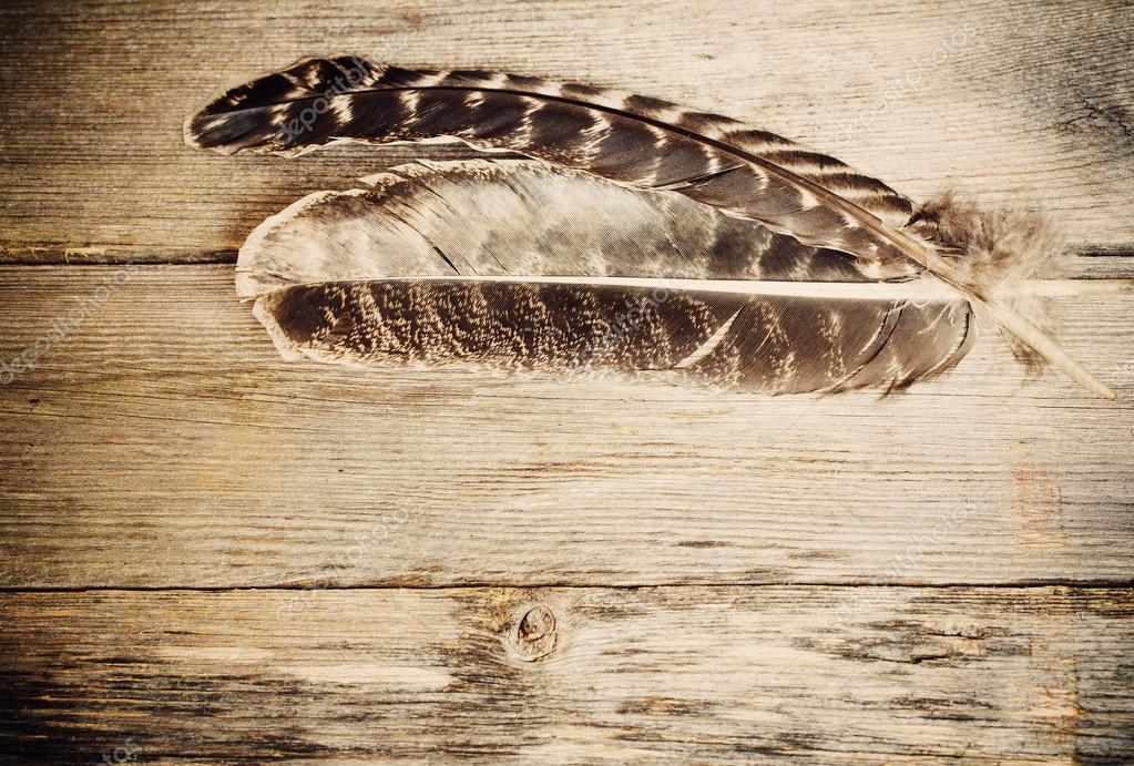 feather on the wooden table