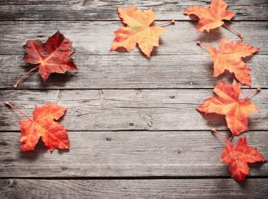 Autumn Leaves over wooden background stock vector