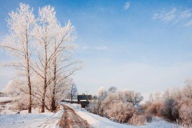 beautiful winter sunny landscape