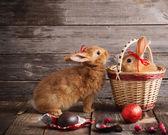 Fotografie Kaninchen mit Schokoladeneier auf hölzernen Hintergrund