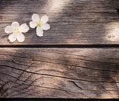 Fotografie flowers on wooden background