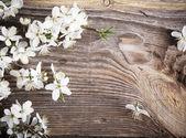 Fotografie květiny na dřevěné pozadí