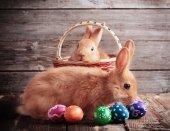 Fotografia conigli con le uova di Pasqua su fondo di legno