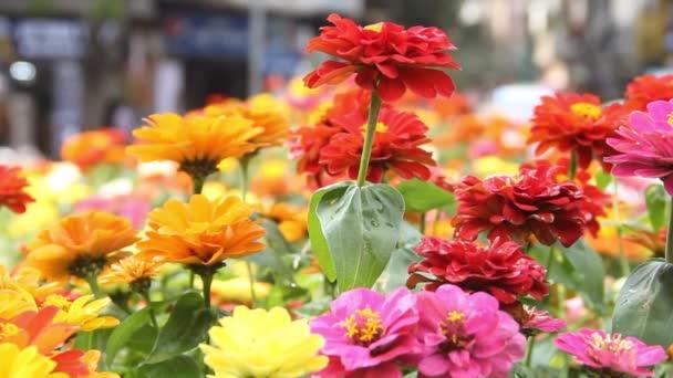 Marigolds a jiné severní okrasné květiny rostou v záhonech