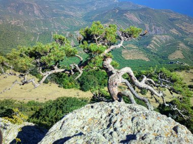 Crimean coast. Black sea. View from decorated with old pine mountains to blue sea