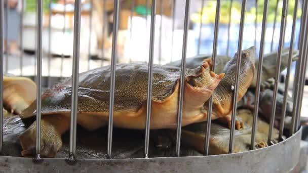 Klappschildkröten werden auf dem vietnamesischen Markt verkauft