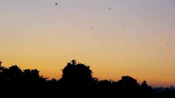 Tropischer Sonnenuntergang in Sri Lanka und fliegende Füchse