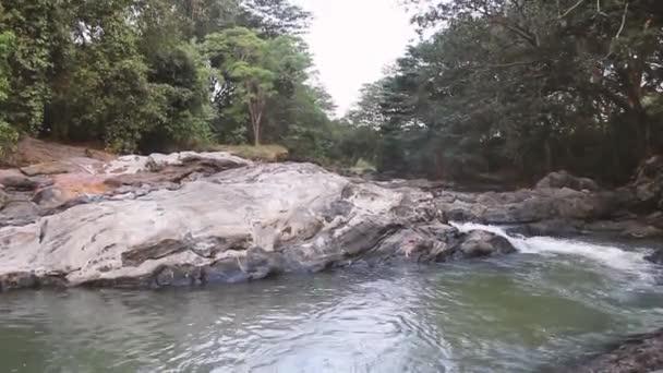 potok ve věčně zeleném deštném pralese