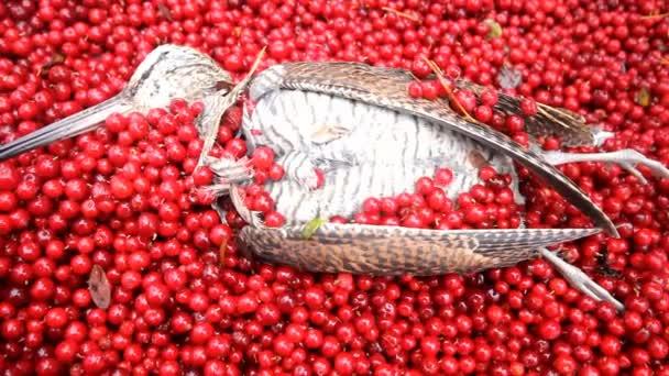 lovecká scéna, pták s červeným ovocem