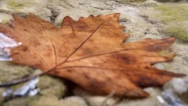 Krásný javorový list pod vodou