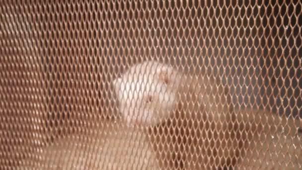 Platinový norek v buňce. chov kožešinových zvířat
