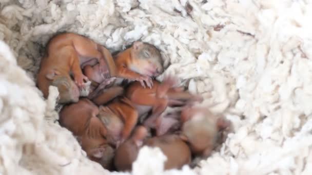 Kleines Eichhörnchen im Nest 2