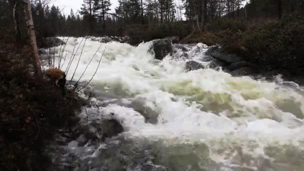 Vad tavaszi patak átfolyik a tajga erdő