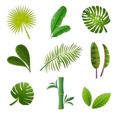 Green tropical leaves set. Tropical plants set.