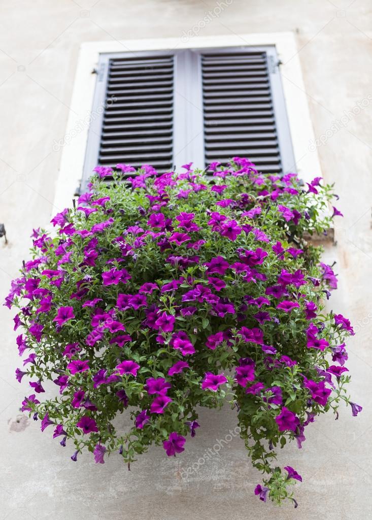 Alte Fenster Mit Geschlossenen Fensterladen Mit Blumen Auf Der