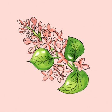 Blossoming branch of apple tree on pink background. Watercolor floral illustration.