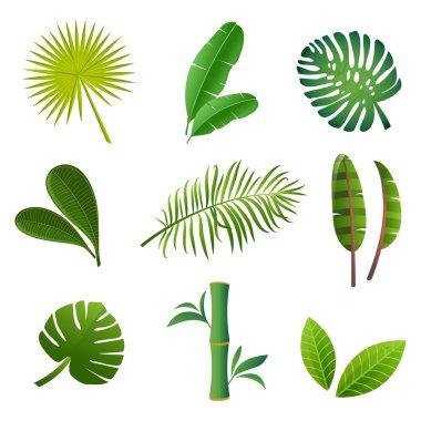 Tropical plants set. Vector illustration of green leaves