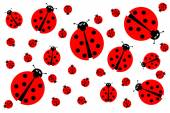 Photo Many Ladybugs