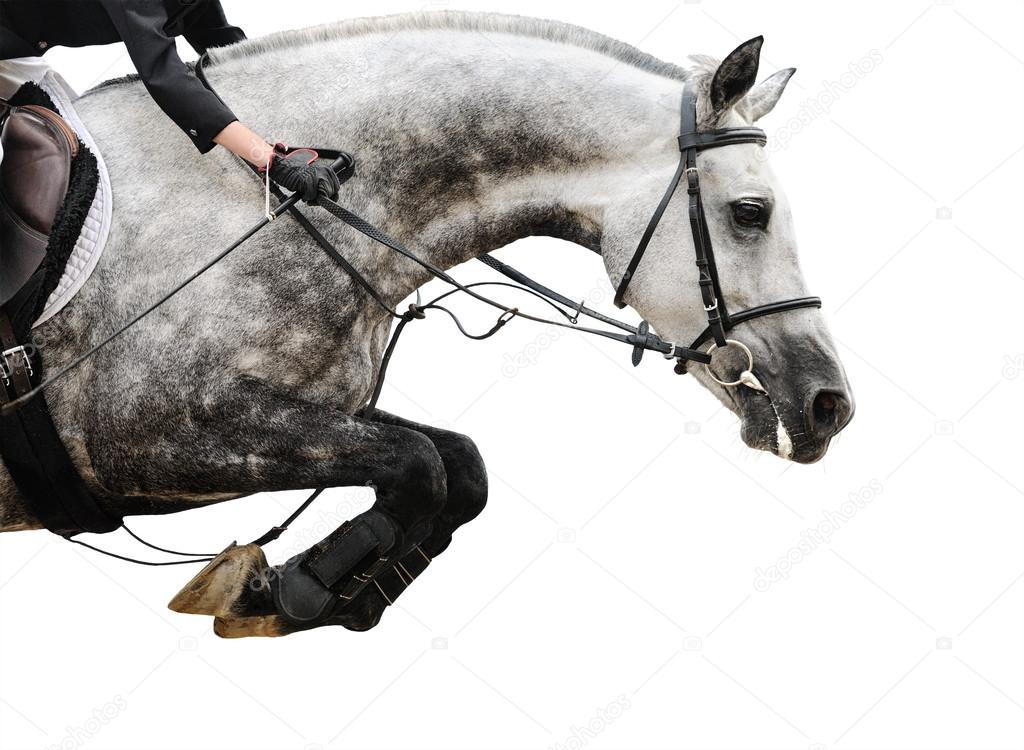Gray Horse In Jumping Show Isolated On White Background Stock Photo C Pirita 59363045