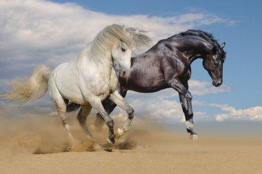 White and black horses galloping in desert