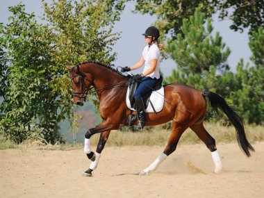 Equestrianism: rider on bay dressage horse, going gallop