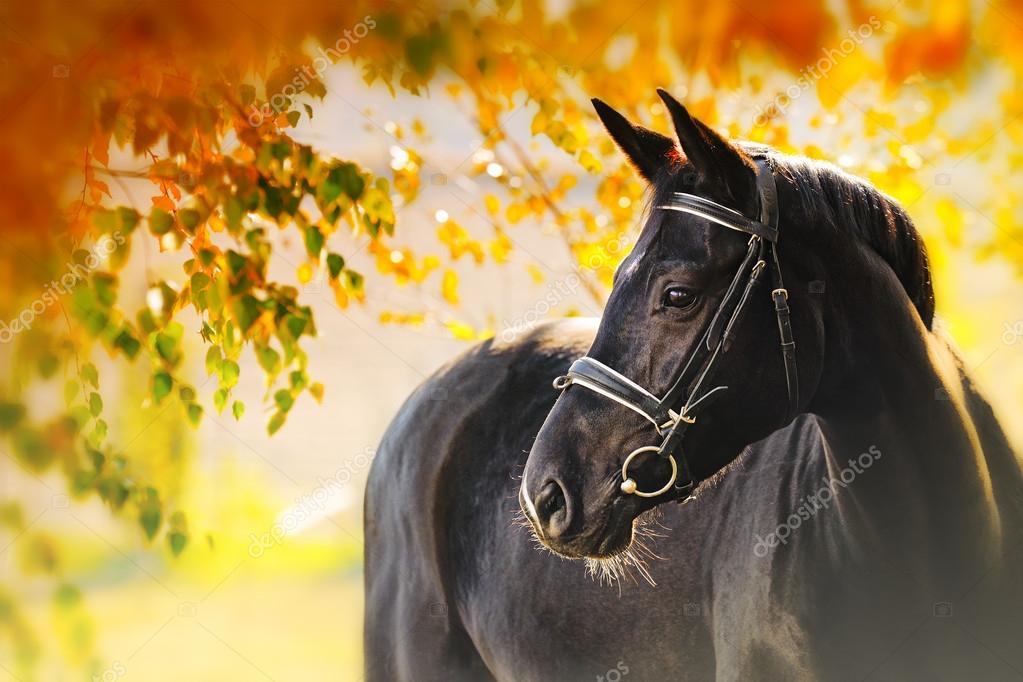 лошади фото осенью