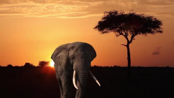 Elefánt, narancssárga ég, fa és afrikai napkelte