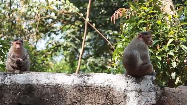 Famiglia della scimmia nella foresta tropicale
