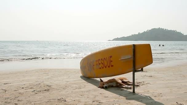 Dog sleeping under Surf Rescue surfboard on the Palolem beach