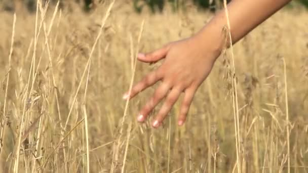 Close up of a girls hand touching wheat in summer field