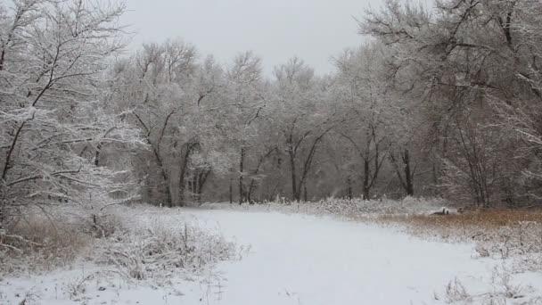 Téli park snow havazás alá tartozó fák