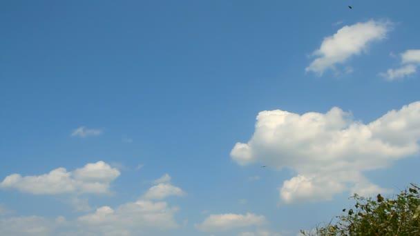 velké hejno ptáků, kteří létali na obloze