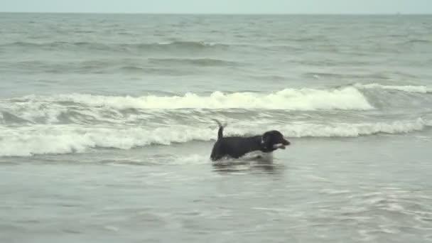 Goa, India - February 28, 2015: dog shall stick out of the sea