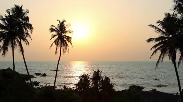 Palm stromy siluetu při západu slunce