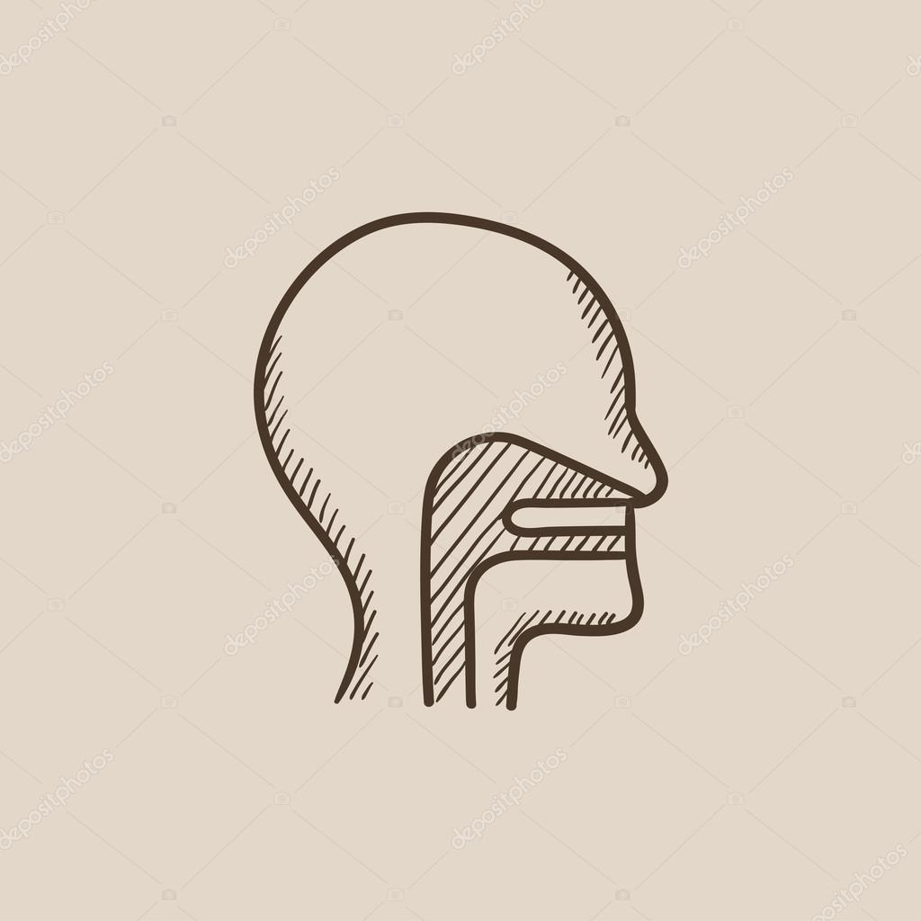 Menschlicher Kopf mit Ohr, Nase, Rachen-System skizzieren Symbol ...