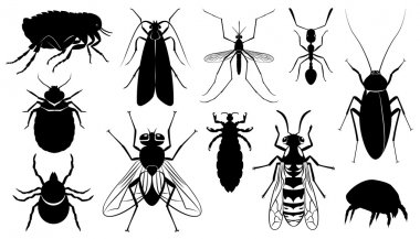 Vector the harmful, stinging and parasitizing insects