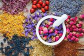 Minomet léčivé byliny, bylinné čaje sortimentu a bobule