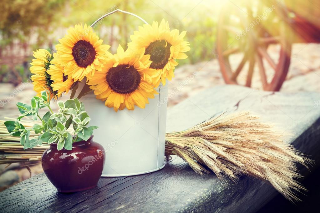 Sunflowers in bucket, ears of wheat and pot with plant on table.