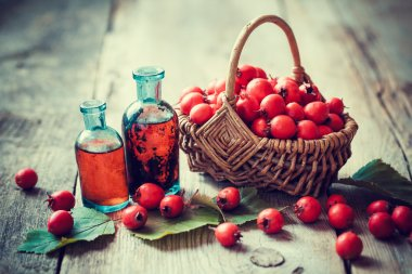 Tincture bottles of hawthorn berries and ripe thorn apples