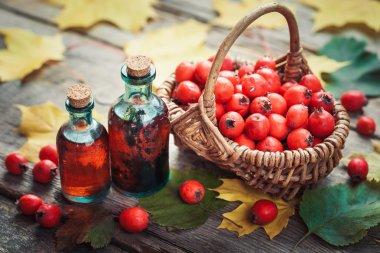 Tincture bottles of hawthorn berries, ripe thorn apples in baske