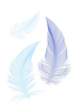 blue birds feathers, vector