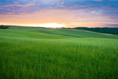 Colorful sunset over the fresh green wheat fields on the rolling hills of the Val d'Orcia valley in Tuscany, Italy. stock vector