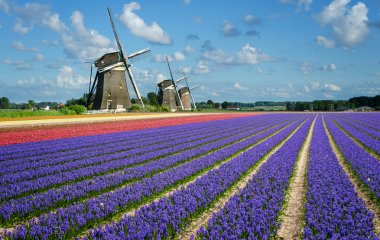 Flowers and windmills in Holland