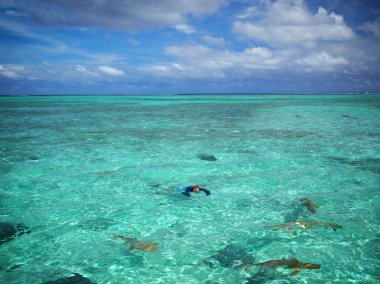Tourist snorkeling with sharks and stingrays