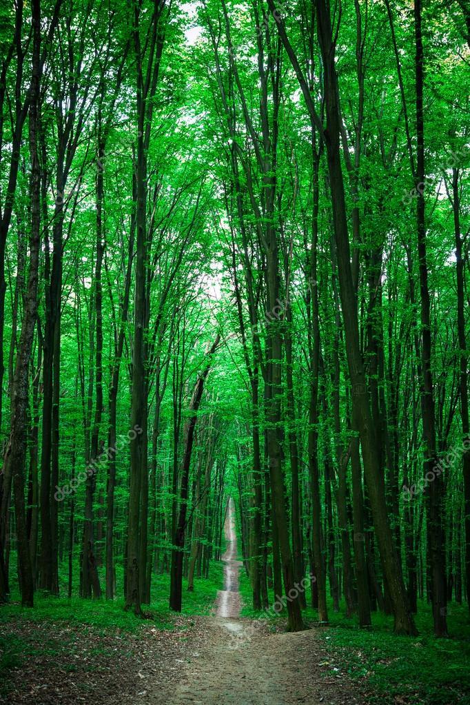 Фотообои beautiful green forest with sunlight