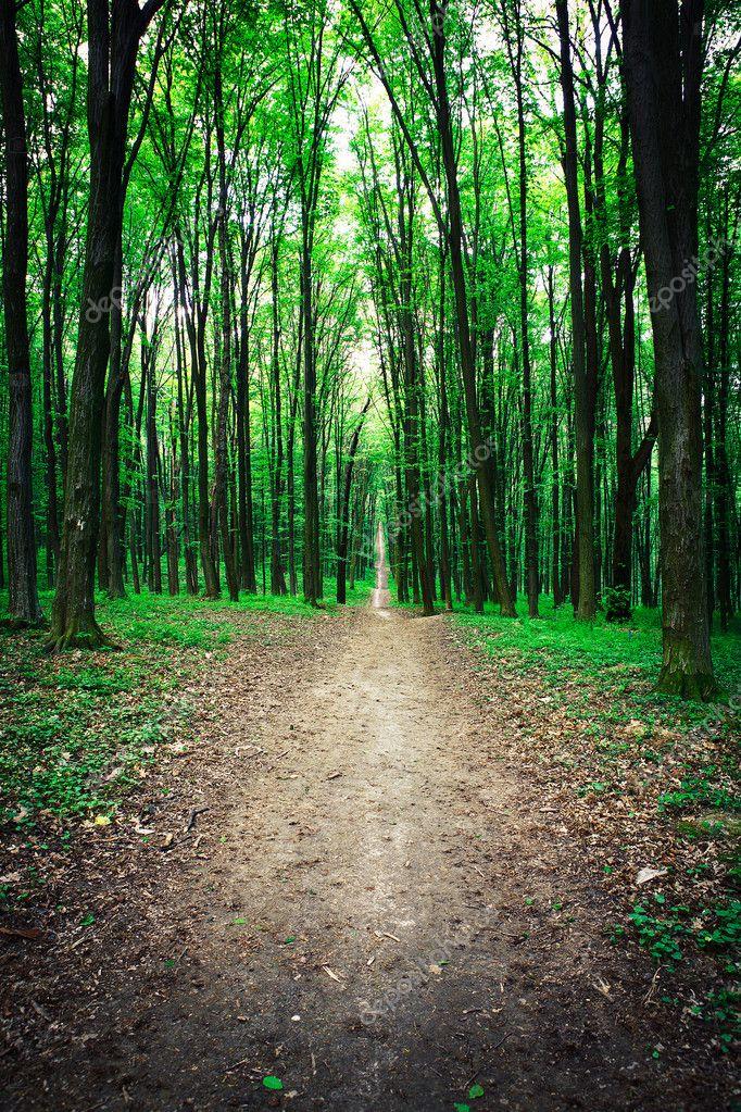 Фотообои Красивый лес