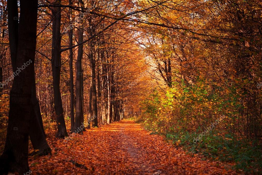 Фотообои autumn forest trees. nature green wood sunlight backgrounds